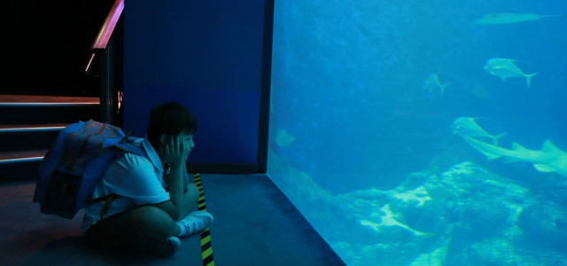 Md Naufal, 11 years old, admires the schools of fishes at S.E.A. Aquarium's Open Ocean Habitat.